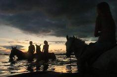 Beach Horses Bradenton Florida