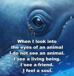 When I look into the eyes of an animal I see a living being. I see a friend. I feel a soul.