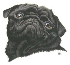 Pug Needle Painting or Thread Painting Hand Embroidery by Tanja Berlin: Berlin Embroidery Designs.  Long and short surface embroidery stitches worked in DMC embroidery cotton on Southern Belle muslin fabric.