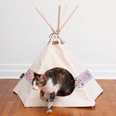 Wren   Cat Tipi