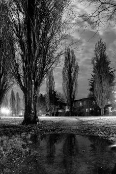 cave lupum - lombardy poplars in reggio emilia by night