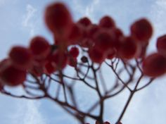 Photo by Tine Bernsen  Red Berries Nature Nordic Fine Art Summertime