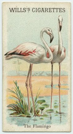 Wills cigarette card. @designerwallace