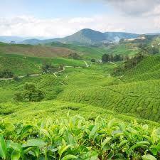 Swaziland wat ruim 17.000 vierkante kilometer groot is met zij hoofdstad Mbane in dit land leven ruim een miljoen inwoners, Swaziland heeft prachtige bomen en vele planten die de moeite waard zijn. Swaziland ligt in het oosten van zuidelijk Afrika en is een koninkrijkje.