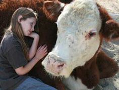 Cuddle with rescued farm animals like cows, pigs, goats and others at this sanctuary in Santa Clarita, California. They even have a vegan feast at Thanksgiving!