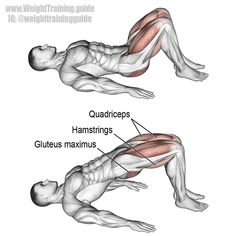 """1,945 Likes, 16 Comments - Weight Training Guide (@weighttrainingguide) on Instagram: """"Glute bridge. An isolation exercise that targets your gluteus maximus. Your hamstrings and…"""""""