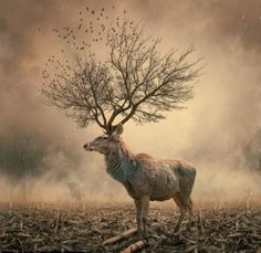 """Metamorphosis"" Bizarre images created by Romanian photoshop artist Caras Ionut Saatchi Gallery, Surreal Photos, Surreal Art, Conceptual Art, Photomontage, Surrealism Photography, Art Photography, Amazing Photography, Photography Editing"