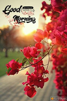 Ya Allah 🙏 make this morning good for every heart deposit his wishes near you and waiting for the relief from you 🍃💓 Morning Quotes For Friends, Cute Good Morning Quotes, Good Morning Inspiration, Good Morning Images Hd, Good Morning Picture, Good Morning Flowers, Beautiful Morning Pictures, Good Morning Today, Good Morning Thursday