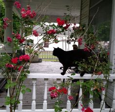 Yoshi~Kitty surrounded by roses