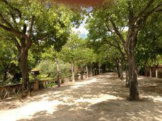 Tapada das Necessidades in Lisboa, Lisboa (Park)