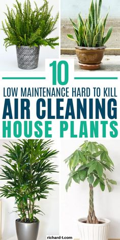 planting for kids 10 Indoor Air Cleaning Plants That Look Amazing & Filter Your Air All Day Air Filtering Plants, Air Plants, Air Purifying Indoor Plants, Flowering Plants, Foliage Plants, Green Plants, Best Indoor Plants, Cool Plants, Indoor Plants Clean Air