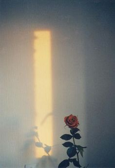 love the speck of light Light And Shadow, Film Photography, Cute Wallpapers, Aesthetic Wallpapers, Flower Power, Red Roses, Iphone Wallpaper, Bloom, Painting