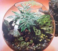 Terrarium- Miniture Garden