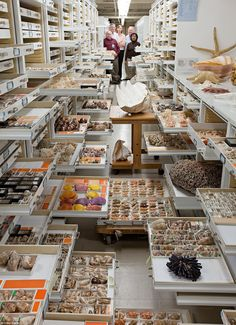 Collections from the Department of Invertebrate Zoology. Researchers present are Paul Gree...