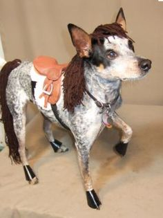 @Ellen Page Drahos can we PLEASE get a dog that would look like a horse dressed up like this...please please please. he would be soo cute to walk with my quarter horse im winning in august.