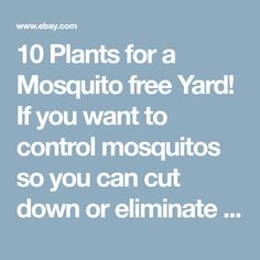 10 Plants for a Mosquito free Yard! If you want to control mosquitos so you can cut down or eliminate using dangerous poisons look no further than nature to do so. As you choose which plants to use, consider...