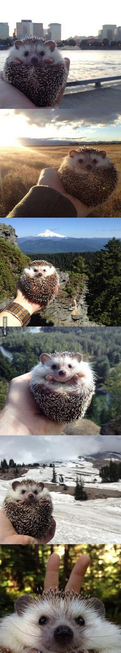 I can show you the woooorld (Hedgehog photographs from different landscapes)