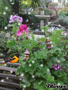 Jardín magico