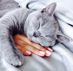 Фото На руке девушки спит котенок