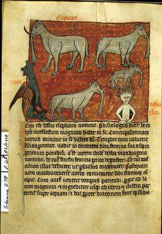 Mandragora,  1280-1300, Hugo de Folieto,  Aviarium - Dicta Chrysostomi, Sloane 278, f. 48v, British Library, Elephants, dragon, and mandrake