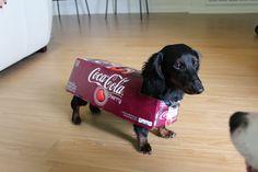 @henry.the.hotdog as Coke Dachshund