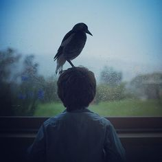 in 2013, noah bloom found a little wounded magpie. the family adopted the bird and decided to call him penguin | newport, australia