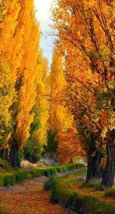 beautiful trees....
