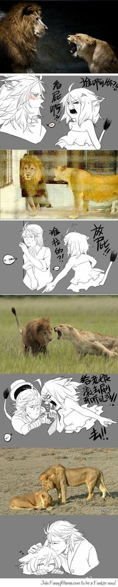 This is so cute XD (tags. Lion anime art couple sweet)