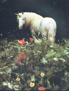 horse | Tumblr