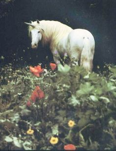 """My words and my ideas are my property, and I'll keep and protect them as surely as I do my stable of unicorns."" J.Kintz"