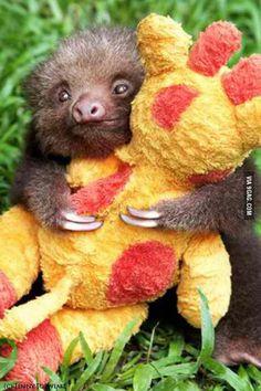 Baby sloth holding stuffed giraffe.