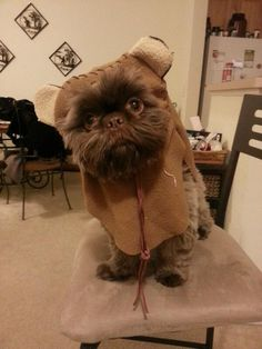 Ewoks make great pets, just don't let them cook.