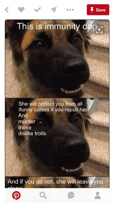 Pinning cause the dog is cute