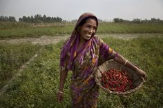 "Bangladesh: Joygun, 20, is a member of the chilli producer group in Bangladesh. She has been trained on improving growing techniques and selling chillies. The chillies have given Joygun confidence and self-belief..enabling her to become the vice president of the local community-based organisation.  ""When the chilli is in full bloom, my field looks beautiful."" says Joygun.  Photo: Rachel Corner/Oxfam"