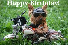 Happy Birthday Biker dog