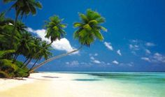 Tropical Beach Scenes