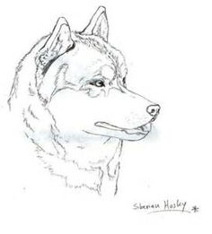 coloring pages huskys - photo#19