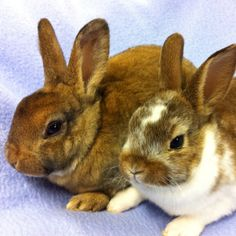 Rex Bunnies RULE.  Remember, bunnies are friends, not food!  ;)