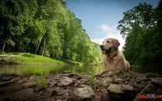 Wichtige Hund auf die Natur Wallpaper