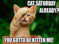 cat saturday 261 Cat Saturday (26 Photos)