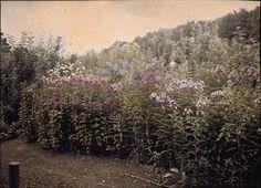 Lumière's Autochrome of a garden, c1910