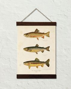 Vintage Trout Canvas Wall Hanging – A vintage Trout illustration displayed on archival canvas along with walnut stained Oak trim. Makes a charming vintage display.