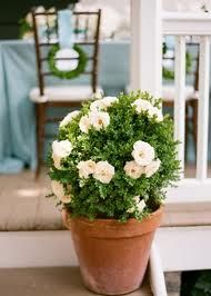 potted plant centerpieces wedding - Google Search
