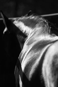 Image result for horse contrast black and white