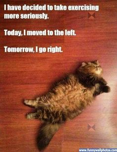 Lol! #fitness #humor  (*And that, gentlecats, is how you do the hokey pokey!  kmh*)