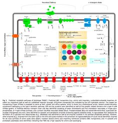 First genome of TM6 – a novel phylum of bacteria – determined from a hospital sink sample -