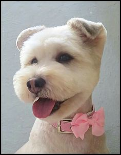 dog care,dog grooming tips,dog ideas,dog nail trimming,dog ear cleaner Dog Grooming Styles, Dog Grooming Salons, Dog Grooming Tips, Dog Grooming Business, Yorky Terrier, Yorshire Terrier, Perros French Poodle, Japanese Dog Grooming, Sweet Dogs
