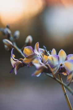 Orchid Flowers, Orchids, Blooming Orchid, Growing Flowers, New Image, Free Stock Photos, Painting, Painting Art, Paintings