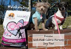 Review: WeRuVa® Caloric Harmony Dog Food #WeRuVaDog #Sponsored Dog Safety, Safety Tips, Information About Cats, Dog Food Reviews, Food Net, Dog Nutrition, Dog Travel, Venison, Nutrition Information