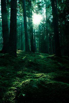 green forestt